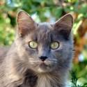Seguros para animales domésticos y de compañia