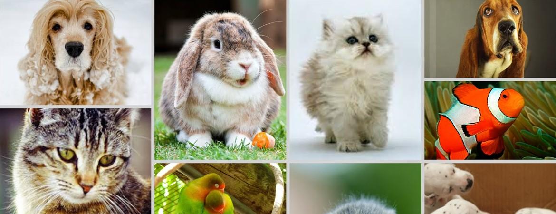 Seguros para mascotas y animales de compañía